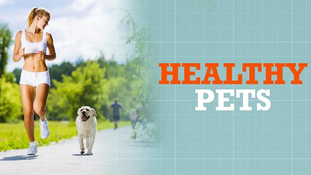 Healthy Pets Teaser Image