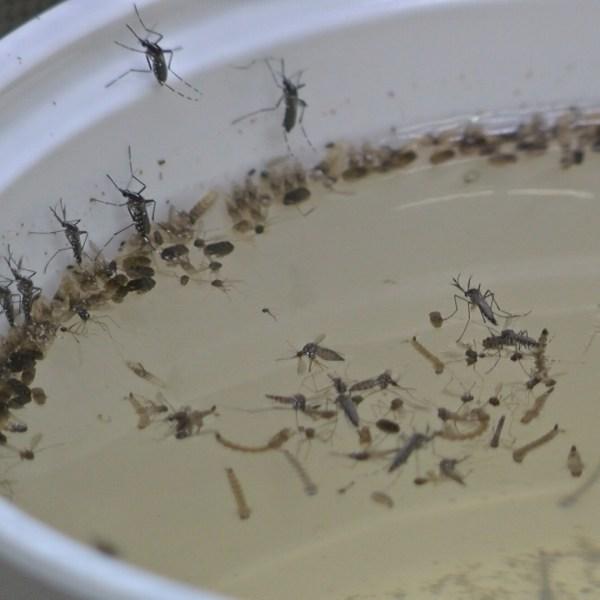 mosquito testing3_1459479193405.jpg