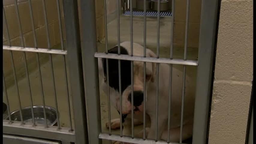 Process of Pet Adoption