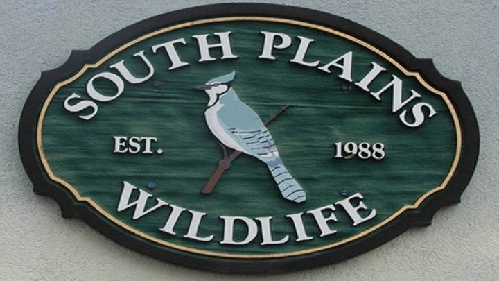 South Plains Wildlife Rehabilitation Center, Inc. - 720