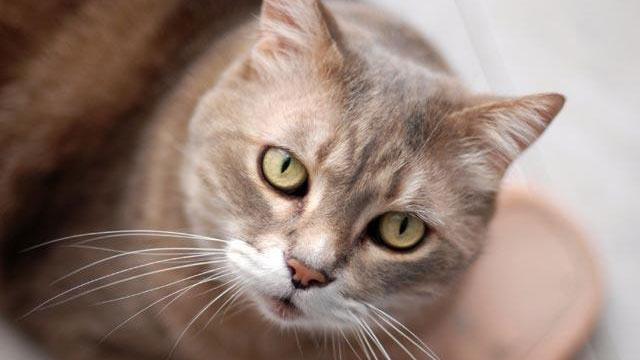 Felix the Cat survives 35-minute machine wash cycle