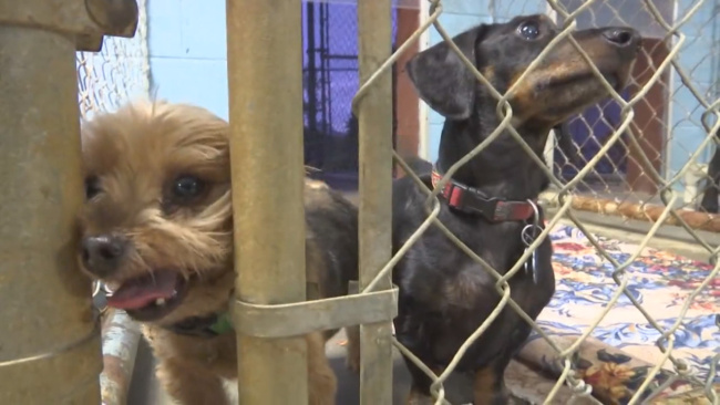 pets rescued from hurricane WATE