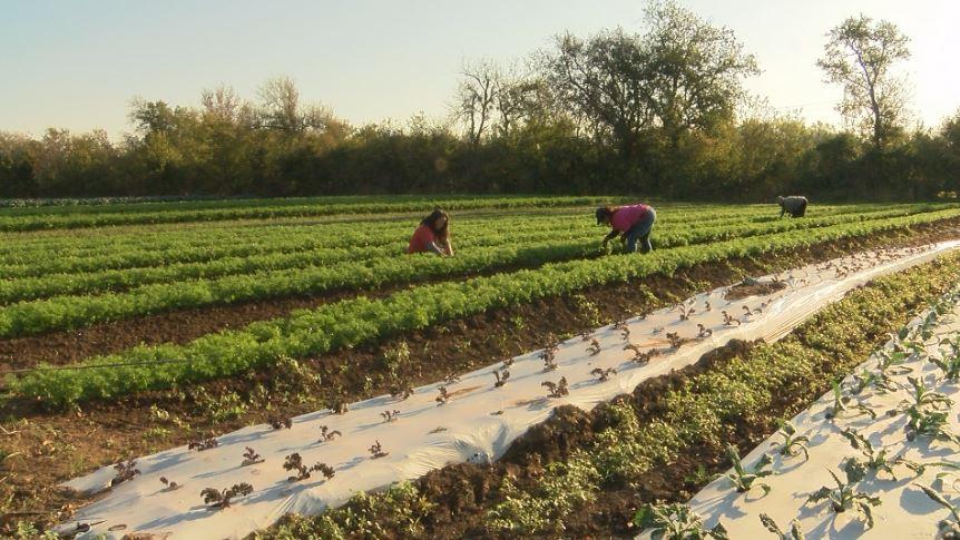 farming_1512002538118.JPG