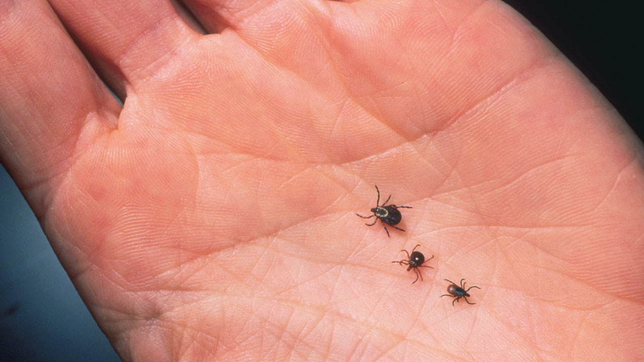 ticks on hand56061209-159532