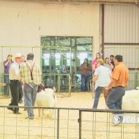 South_Plains_Fair_Stock_Show_0_20180926151454