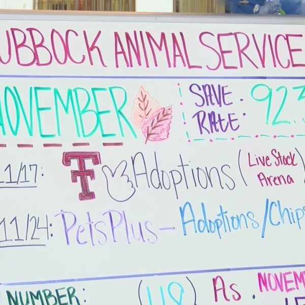Lubbock_Animal_Services_gives_out_tips_t_1_20181124001502