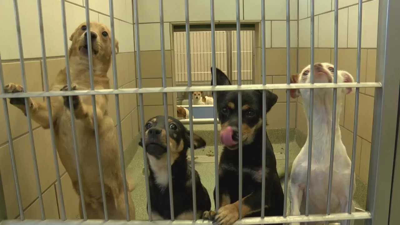 Lubbock Animal Shelter is saving over 90% of animals