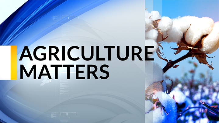 KLBK Agriculture Matters, KLBK Screen Capture (2019) - 720
