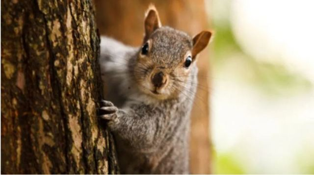 It's National Squirrel Appreciation Day, and there's actually a lot to appreciate